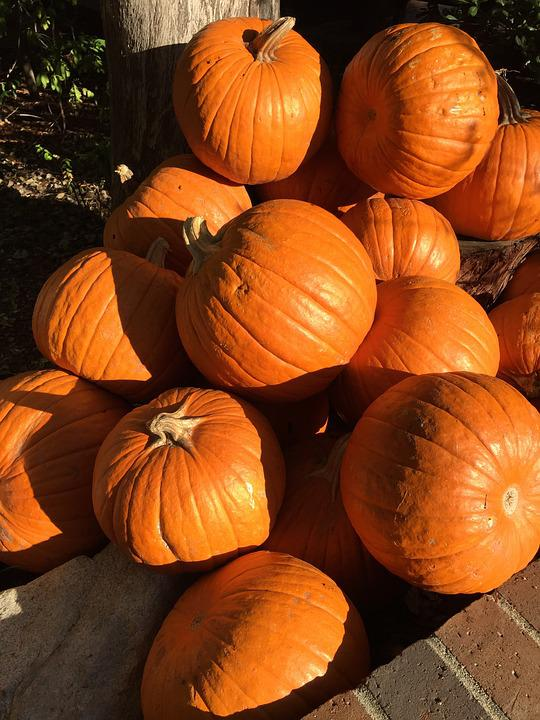 Pumpkins, Shadow, Halloween, Autumn