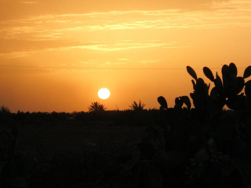 Sunset, Cactus, Shadow