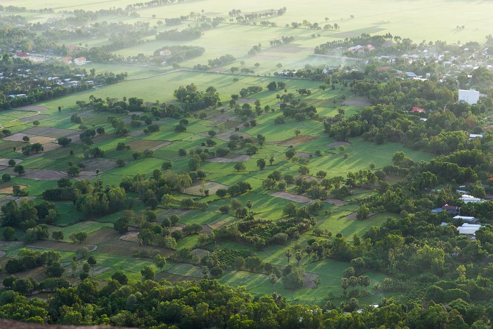 Palm Field, Light, Shadow, Fog