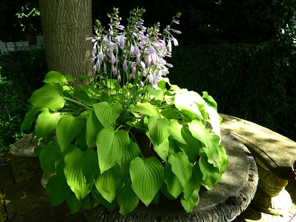 Idyll, Garden Bench, Plant, Light, Shadow