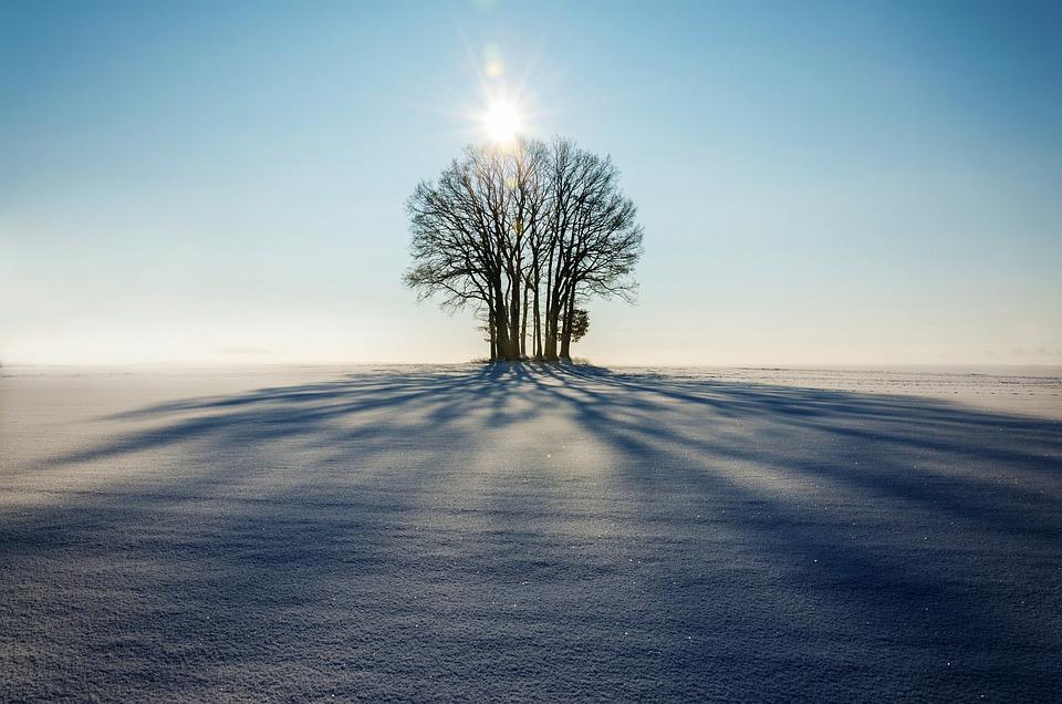 Winter, Landscape, Tree, Lonely, Sunsige, Glow, Shadow