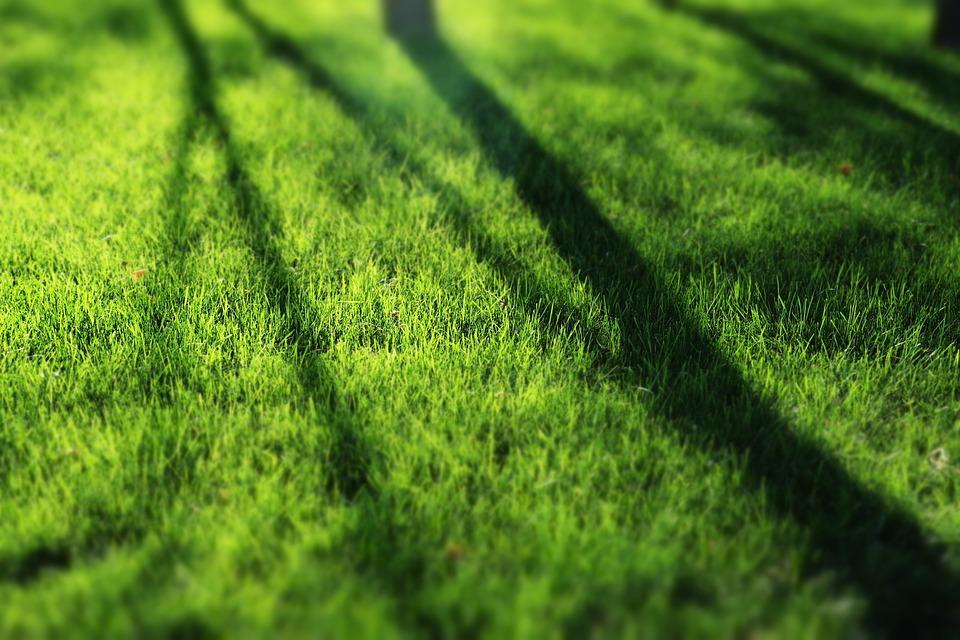 Green, Grassland, Sunshine, Shadow, Park