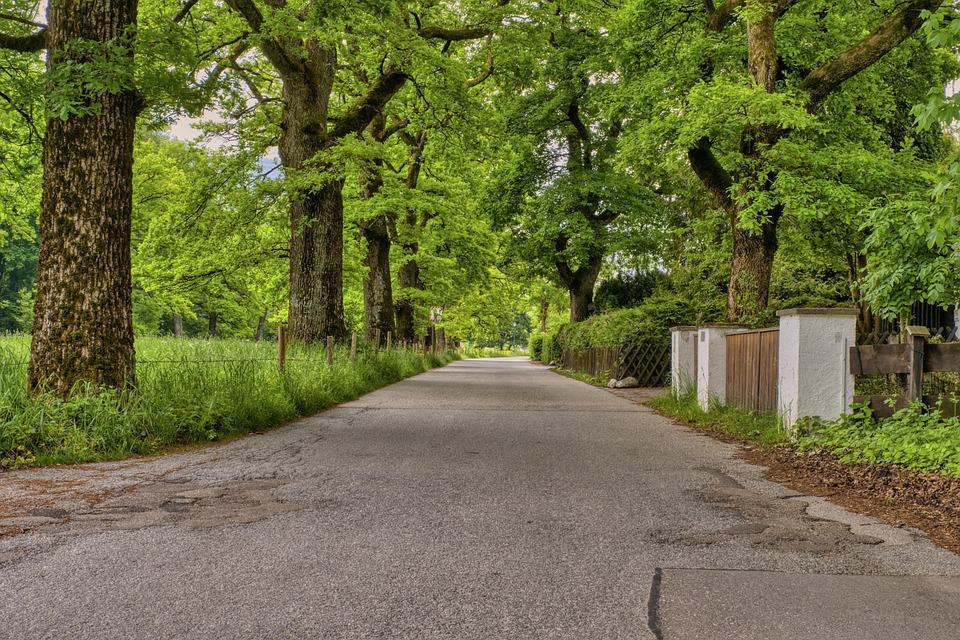 Road, Avenue, Trees, Green, Shadow, Nature