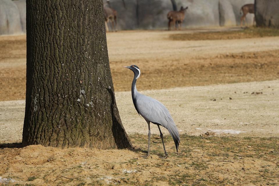 Bird, Common Crane, Animal, Tree, Shadow, Pen, Bark