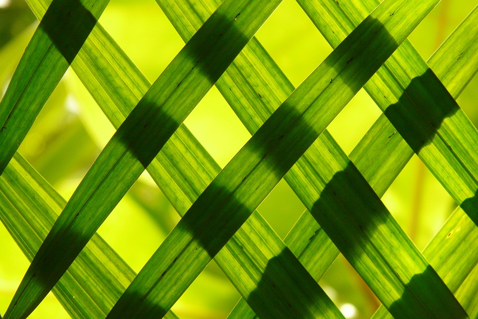 Leaves, Green, Shadow Play, Pattern, Texture, Grass