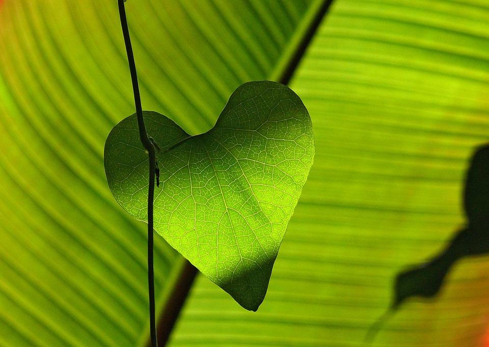 Green, Leaf, Heart, Shadow Play, Leaf Veins
