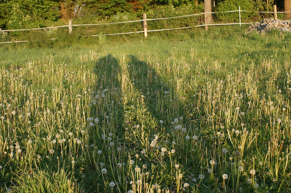 Shadow, Light, Outline, Pair, Shadow Play, Meadow