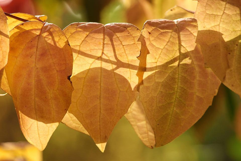 Fall Foliage, Brown, Orange, Light, Shadow, Shadow Play