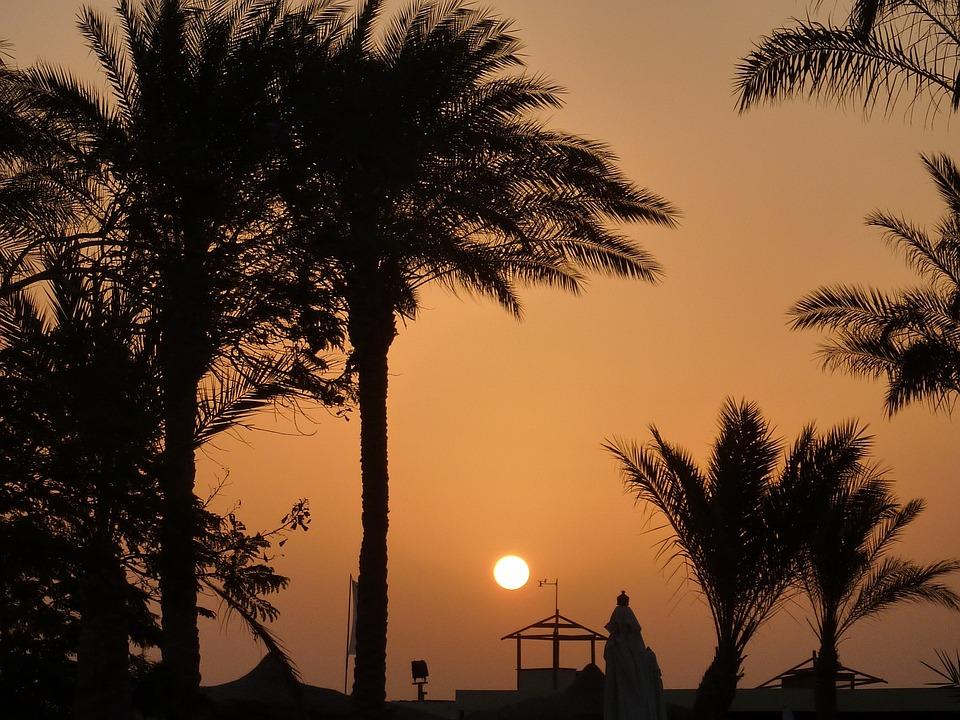 Sunset, Palm Trees, Romance, Mood, Shadow, Sea, Sun