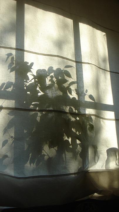 Shadow, Silhouette, Plant
