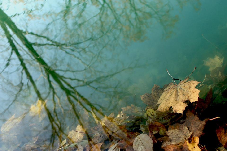 Water, Leaves, Shadow, Reflection, Submerged, Autumn