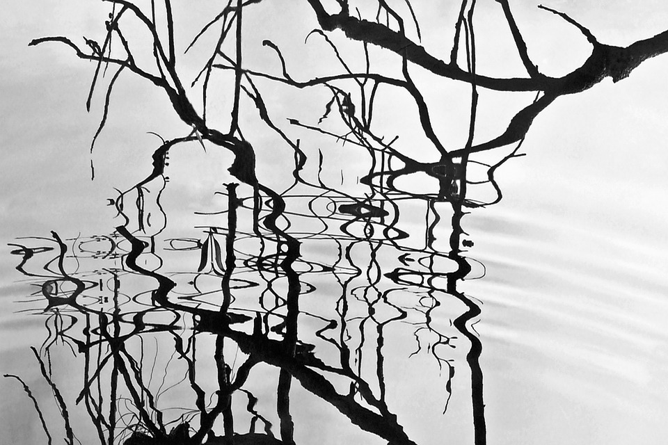 Art, Reflections, Shadows, Lake, Branch, Nature, Shiny