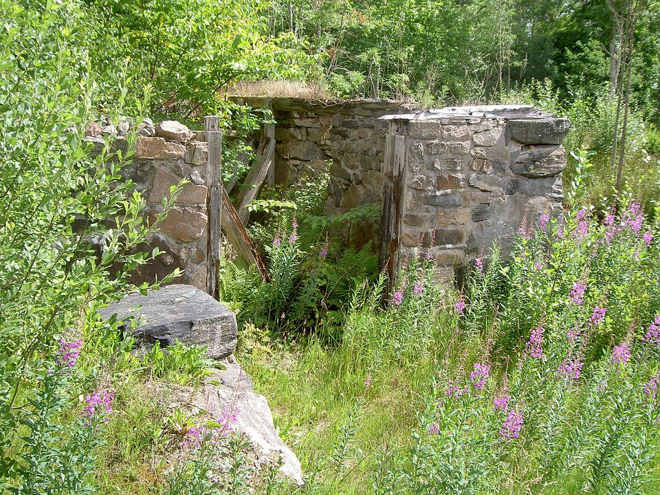 Path, Forest, Sweden, Ruin, Shed, Plants, Green