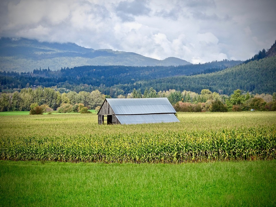 Shed, Hut, Rural, Building, Agriculture, Summer, Farm