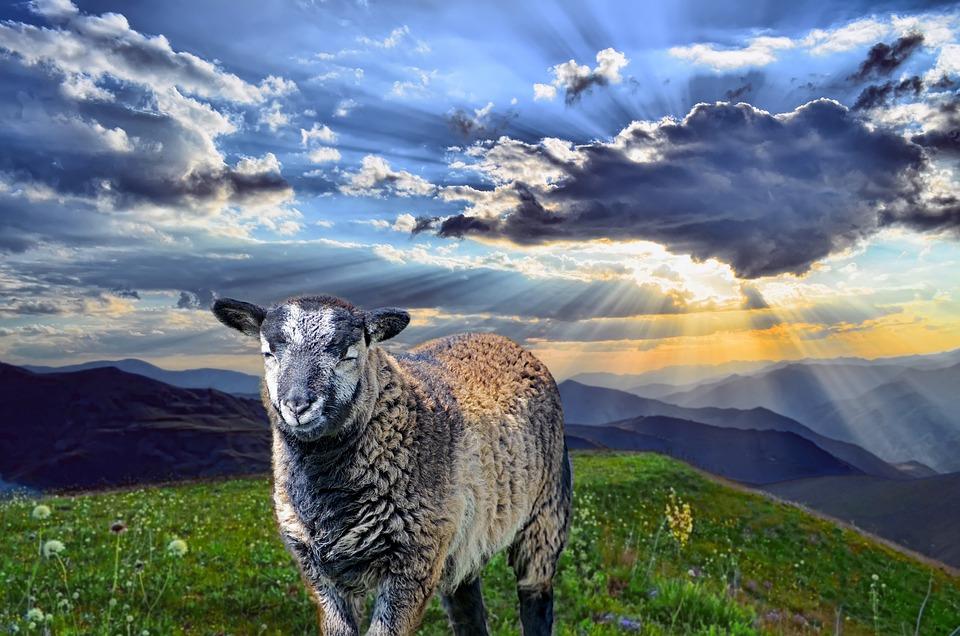 Sheep, Mountains, Sunset, Animal, Mammal, Ram, Ewe