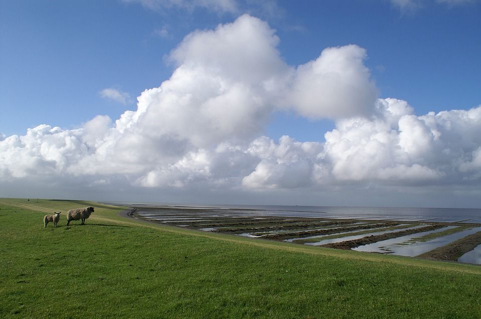 North Sea, Nordfriesland, Sheep, Dike