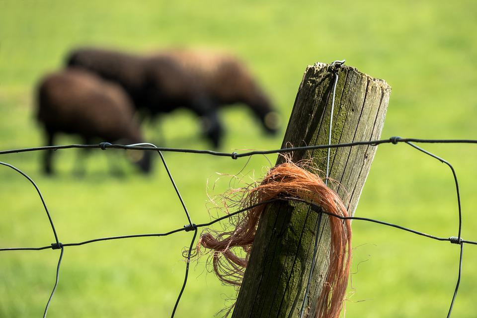 Pasture Fence, Fence, Pasture, Fence Post, Sheep