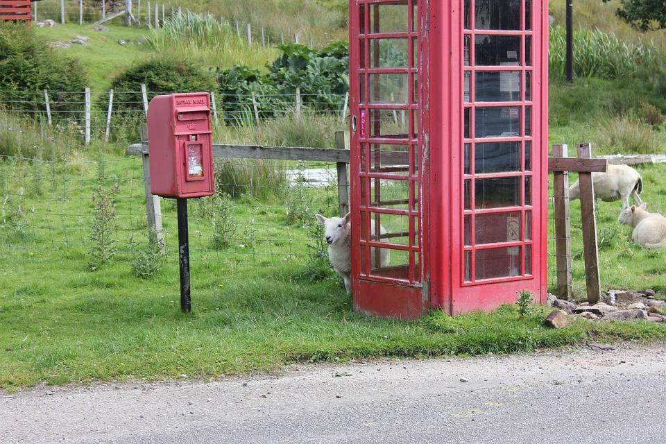 Sheep, Phone Booth, Royal Mail, Scotland, Call