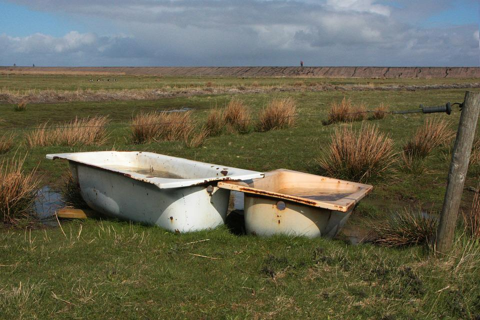 Amrum, North Sea, Bird Bath, Sheep Potions