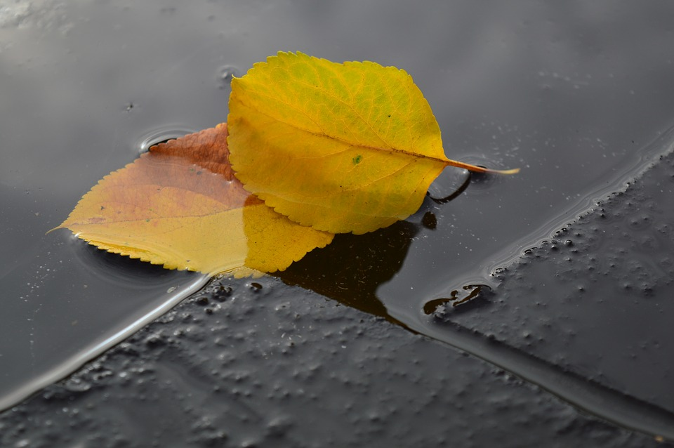 Yellow, Sheet, Ice, Water, Autumn