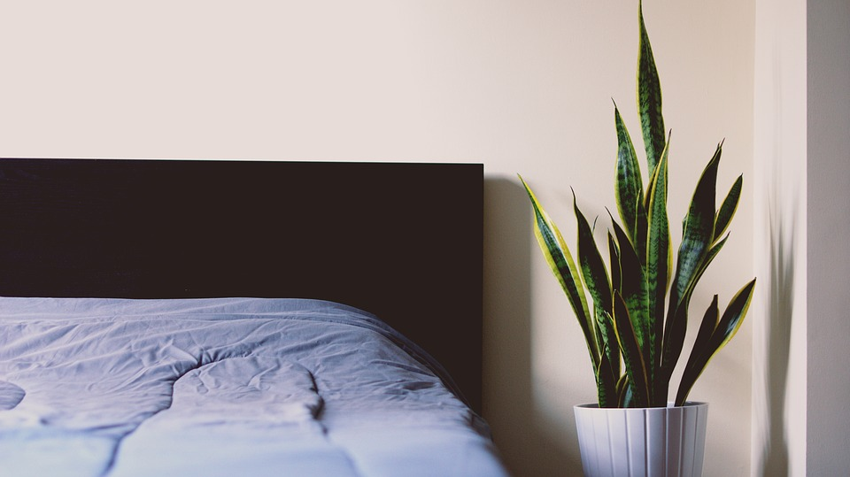 Bed, Sheet, Sleep, Relax, Plant, Room, House