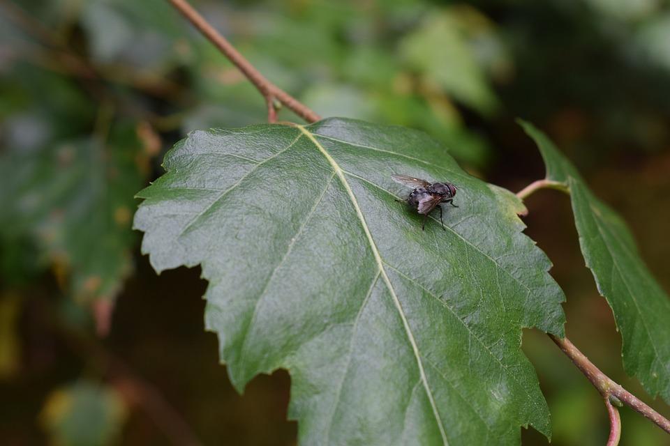 Fly, Bug, Green, Sheet, Nature