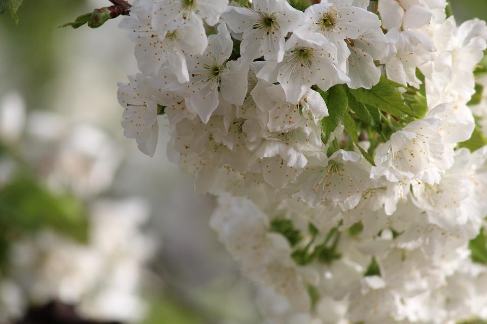 Flower, Nature, Plant, Sheet, Branch, No One, Garden