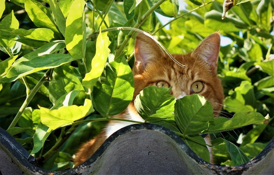 Nature, Animal Kingdom, Sheet, Outdoor, Little