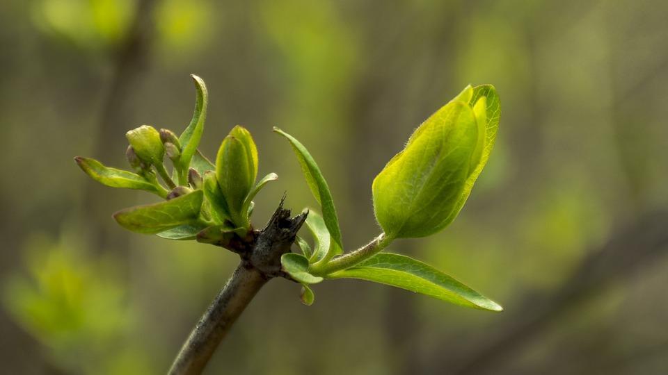 Macro, Green, Nature, Sheet, Garden, Plant