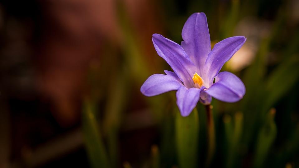 Nature, Plant, Petal, No Person, Sheet, Season, Garden