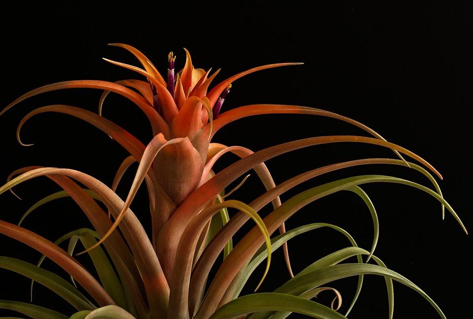 Orange, Sheet, Sukulent, Flower, Retail, Close Up