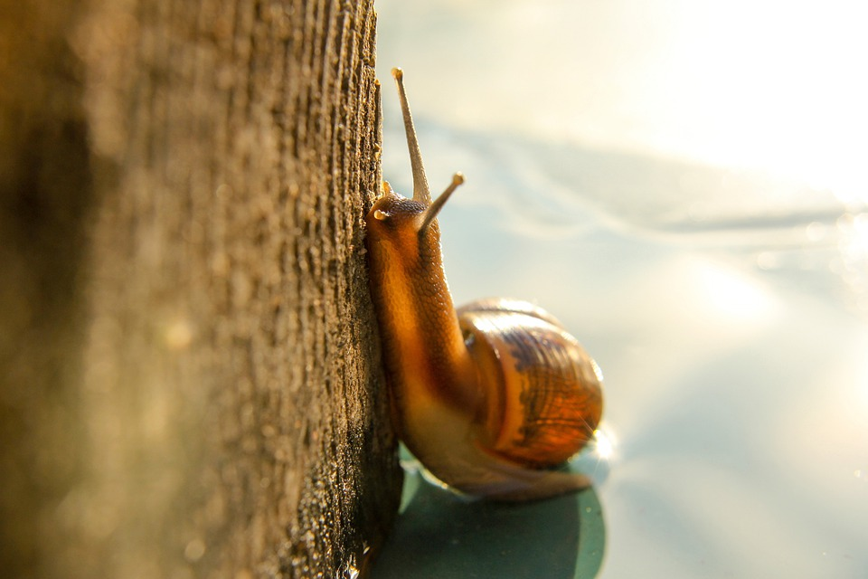 Macro, Snail, Nature, Clam, Slowly, Shell, Creeps, Slug