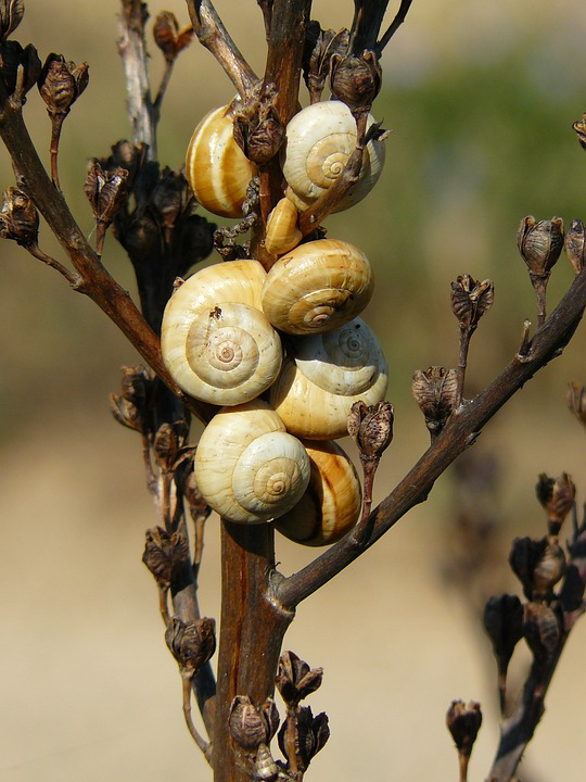 Snails, Shell, Snail, Close, Snail Shell, Mollusk