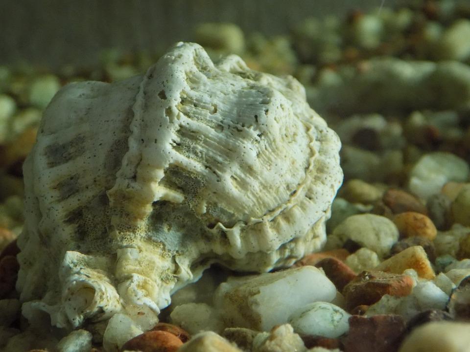 Shell, Crustaceans, Background, Submarine