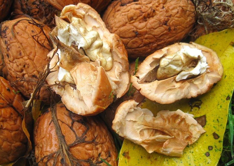 Fresh Walnuts, Garden, Harvest, Nut, Shell, Nature