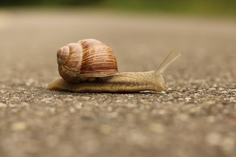Snail, Nature, Shell, Close Up, Reptile, Animal, Mucus