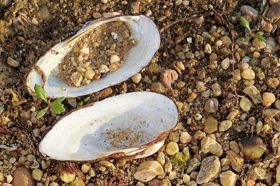 Shell, River Shell, Riverside, Pebble