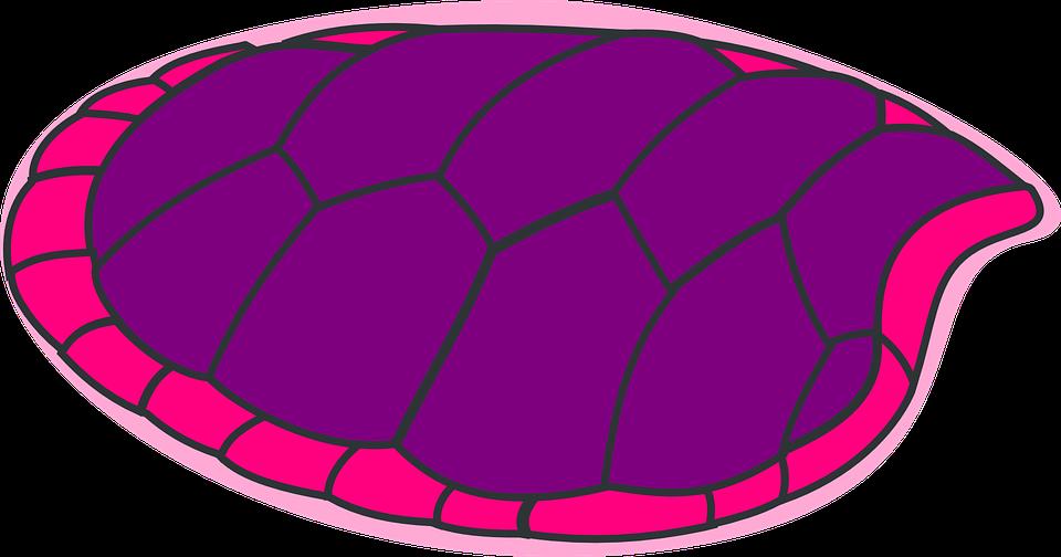 Turtle, Purple, Pink, Shell