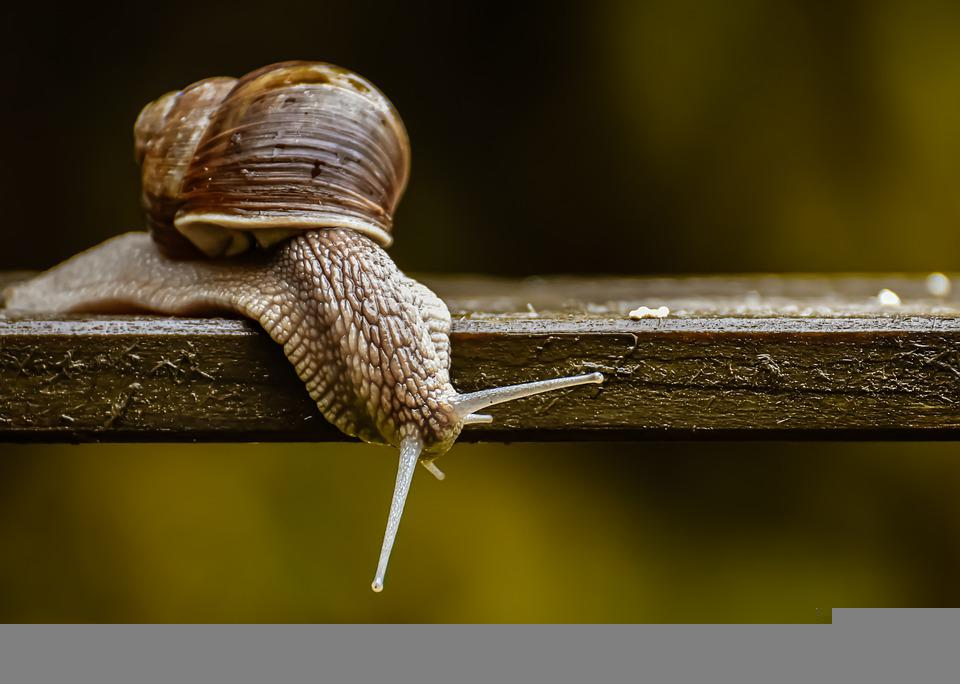 Snail, Nature Conservation, Protected Animal, Shell