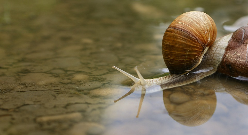 Snail, Shell, Water, Puddle, Macro, Underwater, Stone