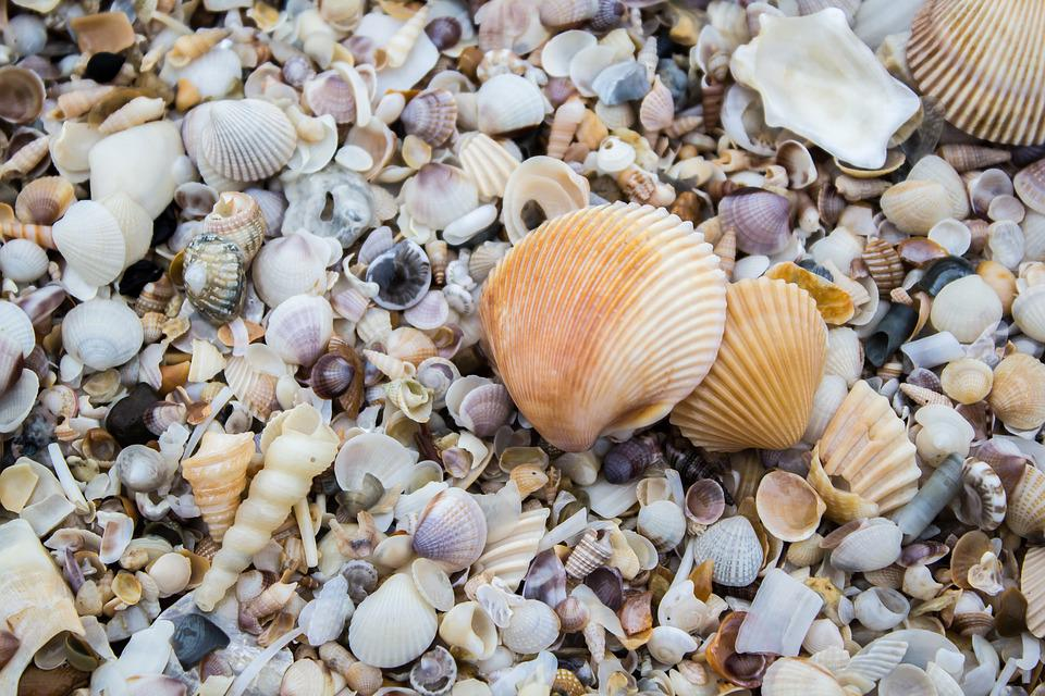 The Mussels, Shell, Sea