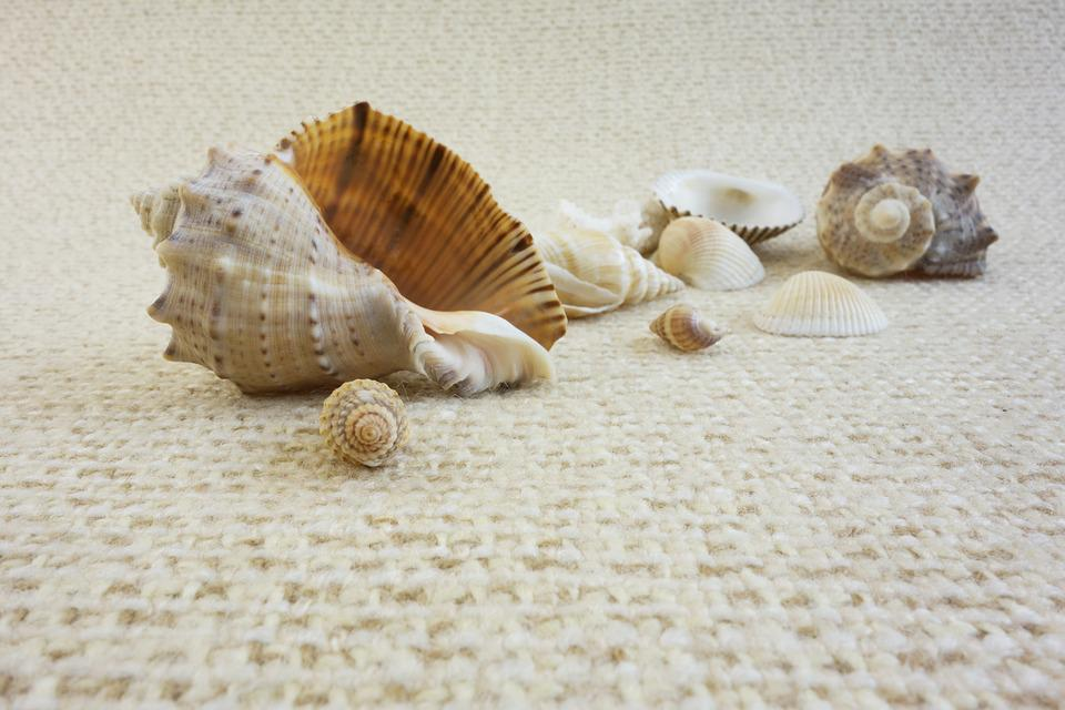 Sink, Shell, Sea, Life, Oceanic, Vacation, Beach