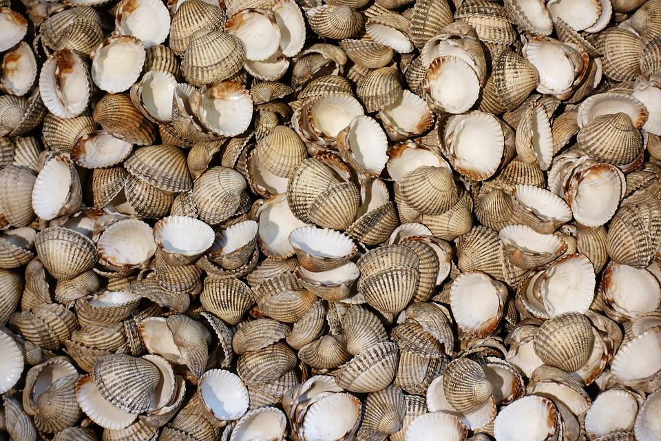 Cockle, Shell, Shellfish, Seafood, Mollusc, Bivalve