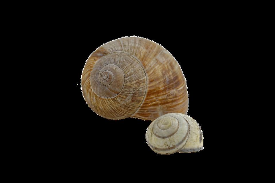 Snail, Shell, Spiral