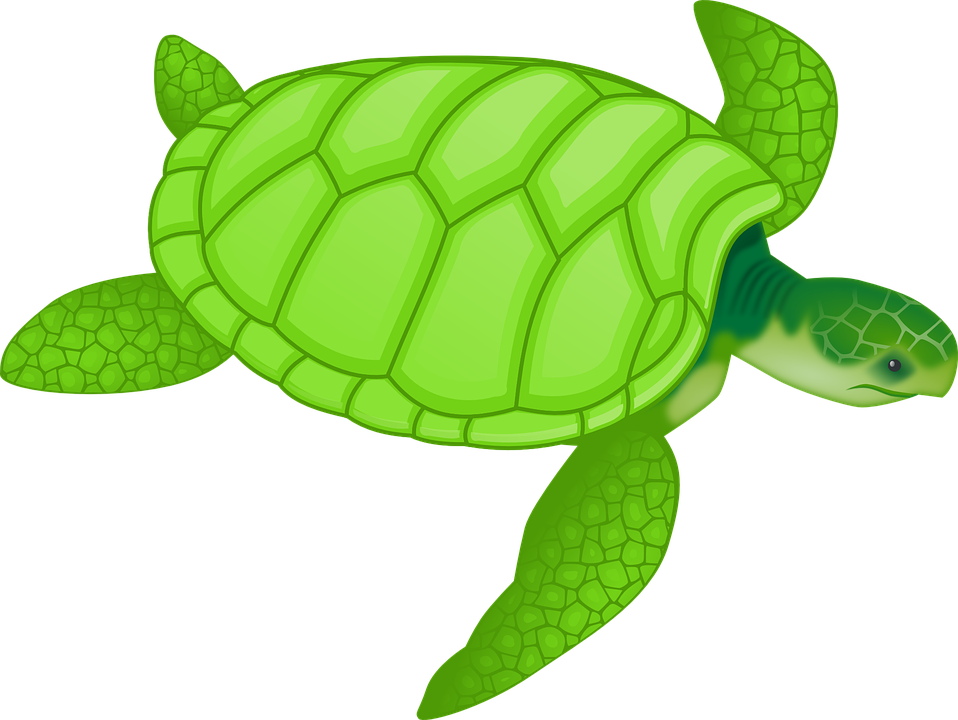Tortoise, Green, Reptiles, Turtles, Hard, Tough, Shell