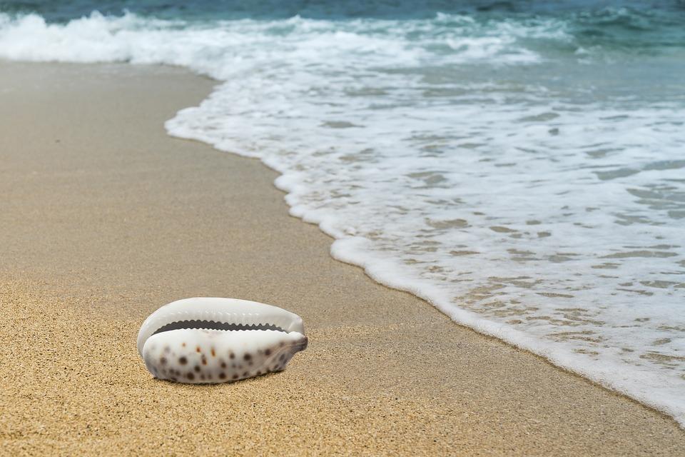 Beach, Sand, Coast, Sea, Waters, Kauri, Shell, Summer