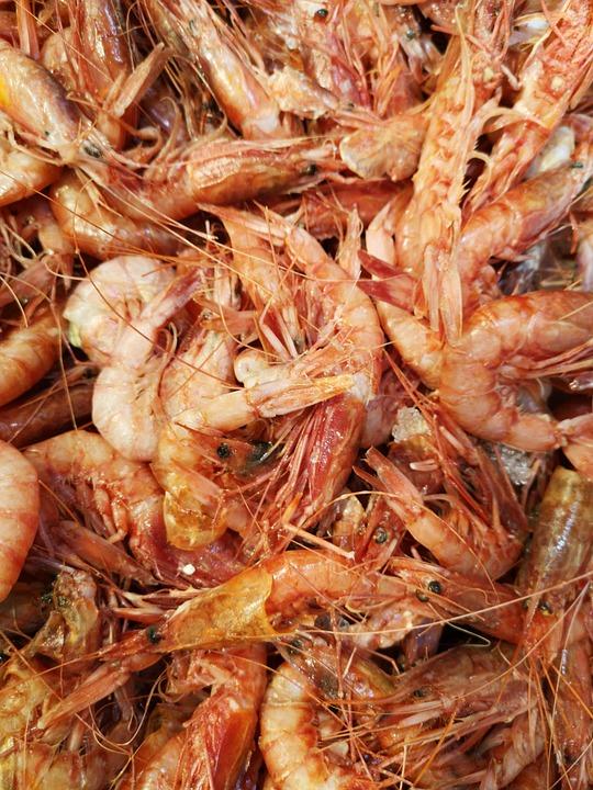 Shrimp, Red, Marine, Water, Ocean, Healthy, Shelled