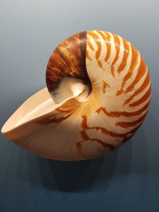 Shellfish, Evertebrat, Exoskeleton, A