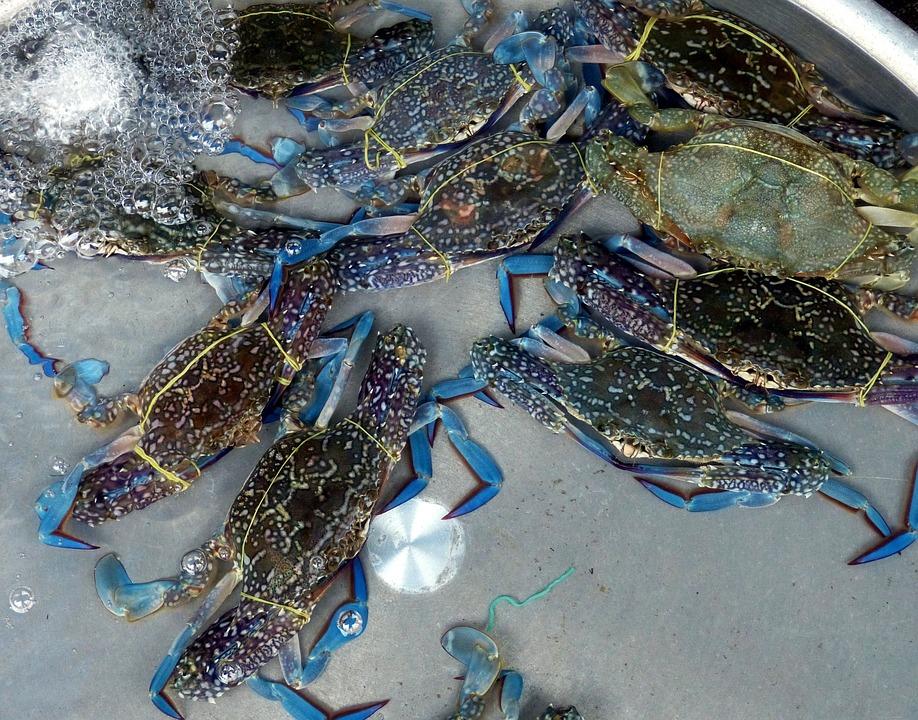 Crab, Cancer, Shellfish, Animal, Pliers, Meeresbewohner