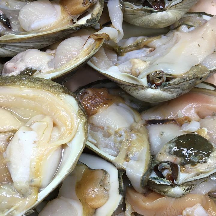 Clams, Fresh, Shellfish, Raw